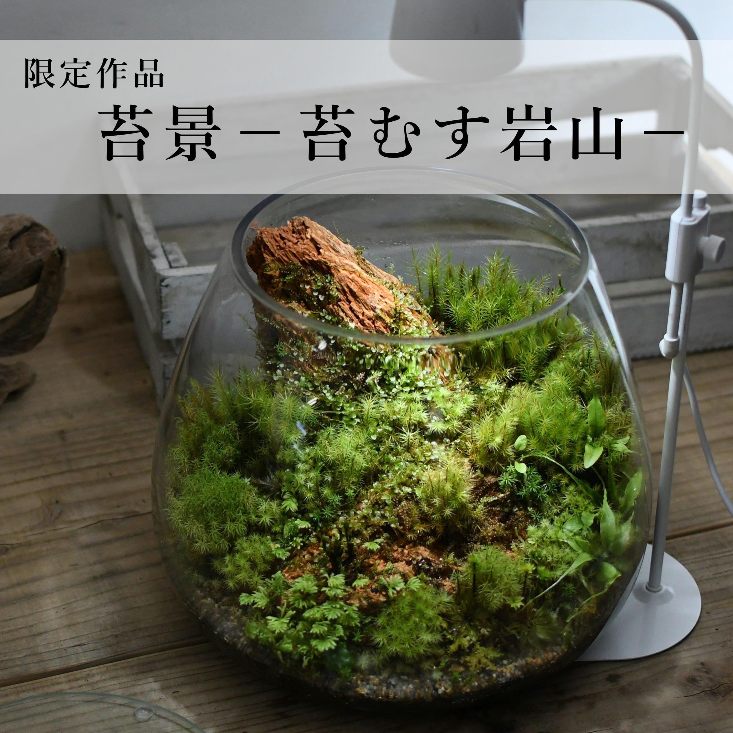 苔景−苔むす岩山−【苔テラリウム・現物限定販売】