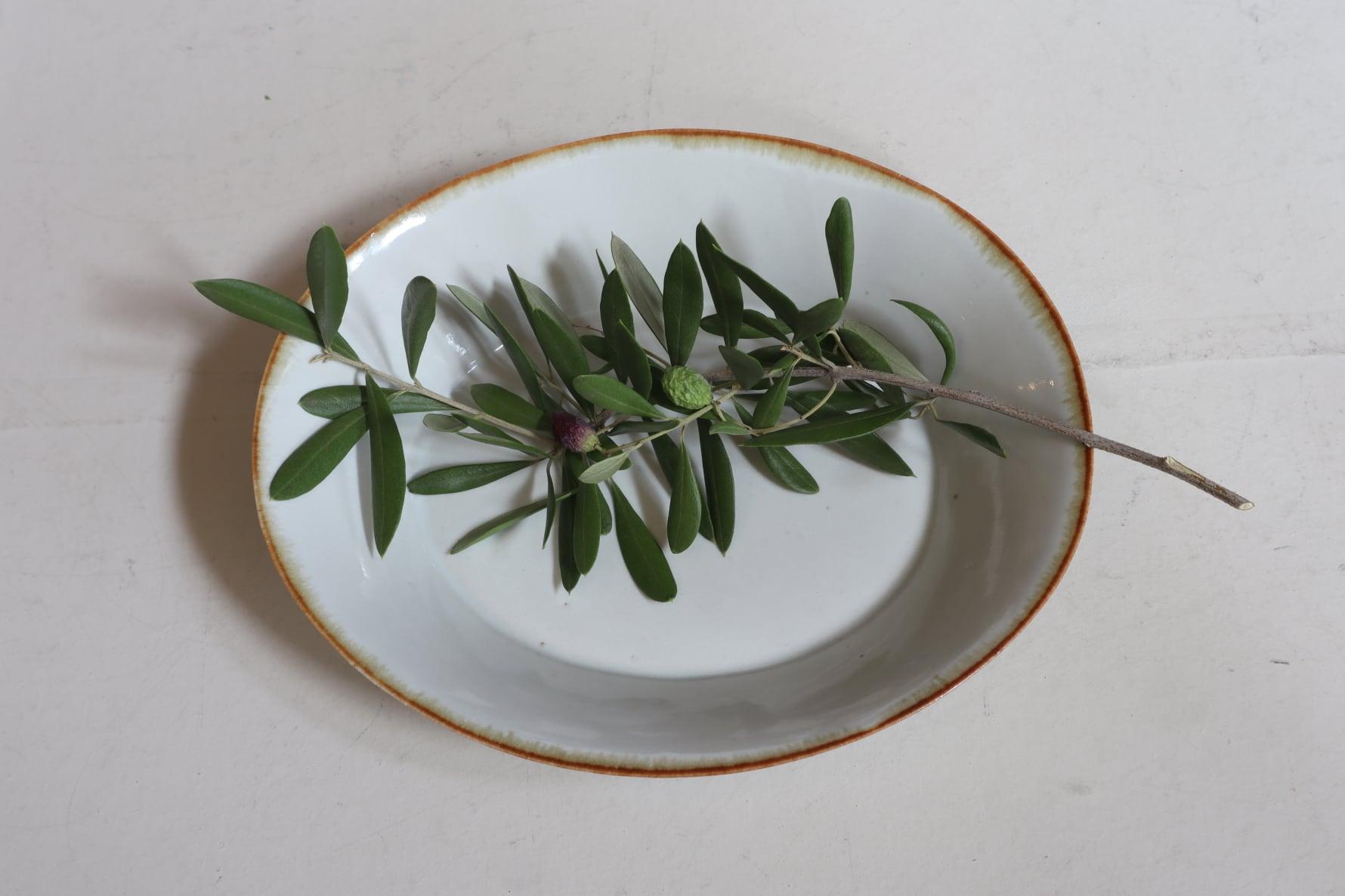 菅沼淳一 24.白釉楕円鉢