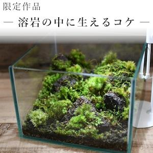 作品名− 溶岩の中に生えるコケ−【苔テラリウム・現物限定販売】