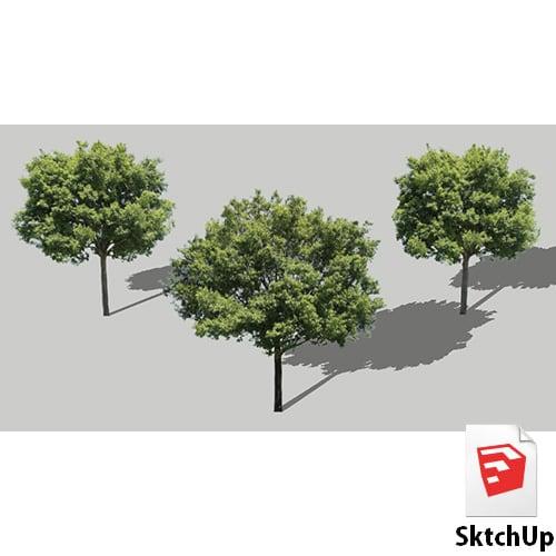 樹木SketchUp 4t_005 - 画像1