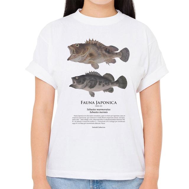 【カサゴ・メバル】シーボルトコレクション魚譜Tシャツ(高解像・昇華プリント)