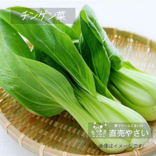 チンゲン菜 約180g前後 2~4株: 5月の朝採り直売野菜 春の新鮮野菜  5月15日発送予定