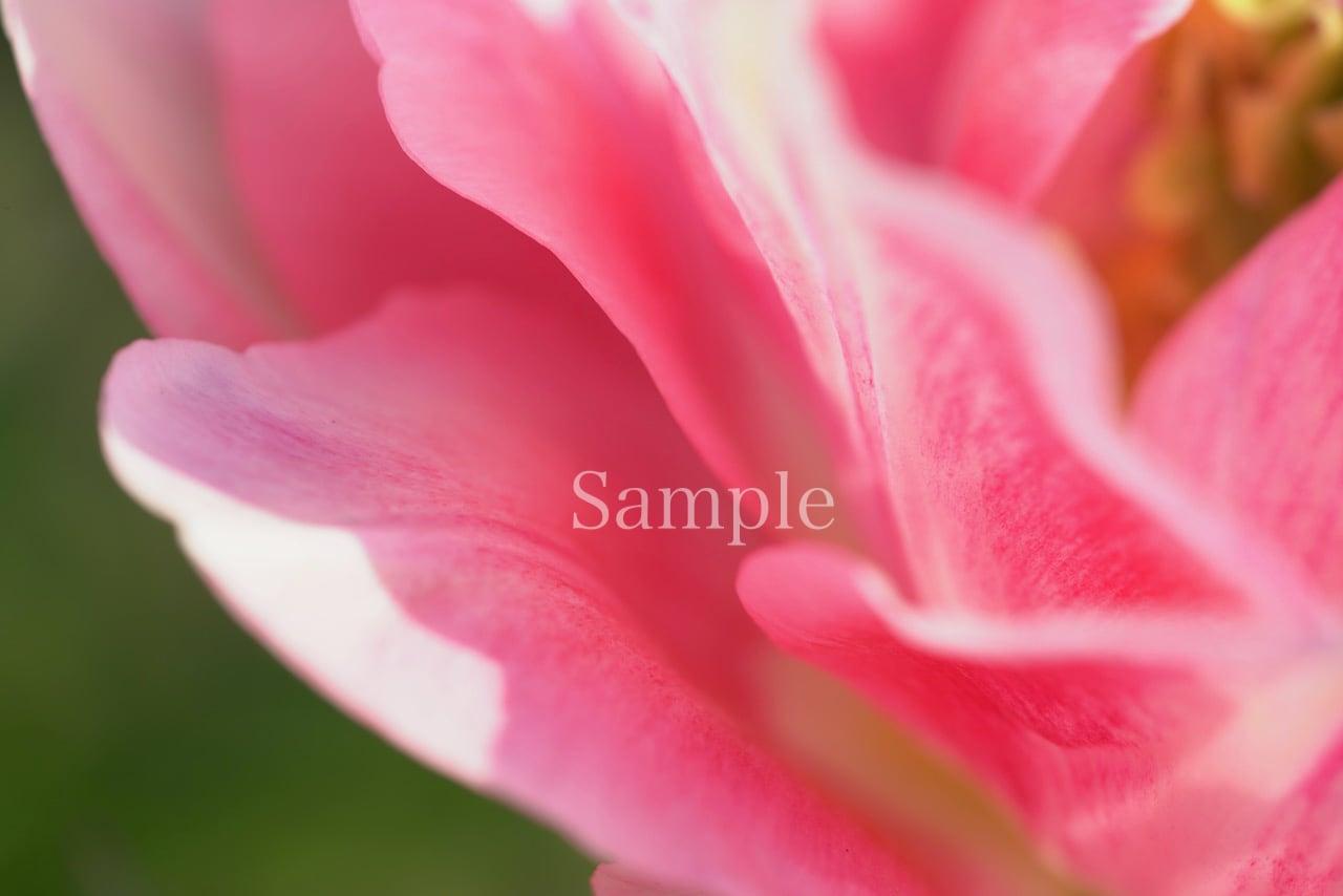 海響(MIKI)オリジナルフォト エネルギーフラワー(花)パターン① メタルプリント サイズ(中)30cm×40cm