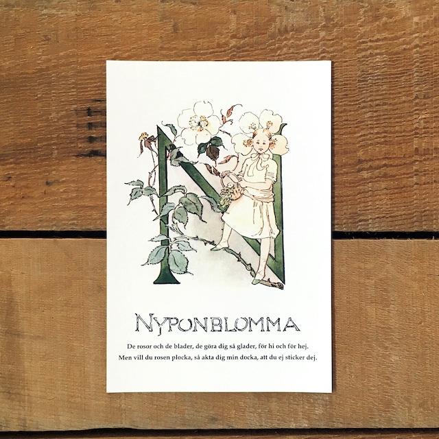 ポストカード「ノイバラ@NYPONBLOMMA(王子たちの花文字 - 14)」