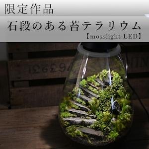 【現物販売・苔テラリウム】石段のある苔テラリウム【mosslight-LED】