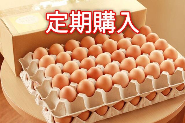 【定期購入】永光農園の平飼い有精卵 80個入り