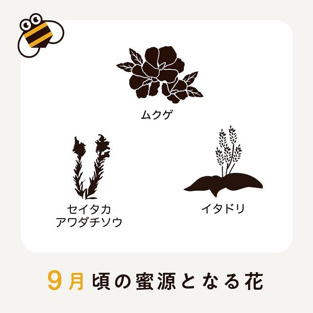 【9月】さっぱち蜂蜜2020