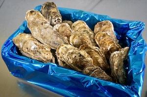 昆布の森の牡蠣『北海道仙鳳趾産 殻付き牡蠣』2Lサイズ(250g以上/個) 大箱(約20個)