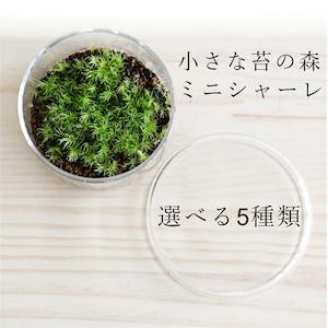 【実験のように楽しむ苔テラリウム】小さな苔の森 ミニシャーレ◆選べる5種