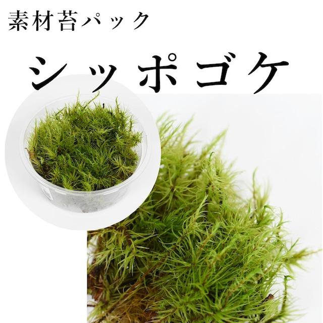シッポゴケ 苔テラリウム作製用素材苔