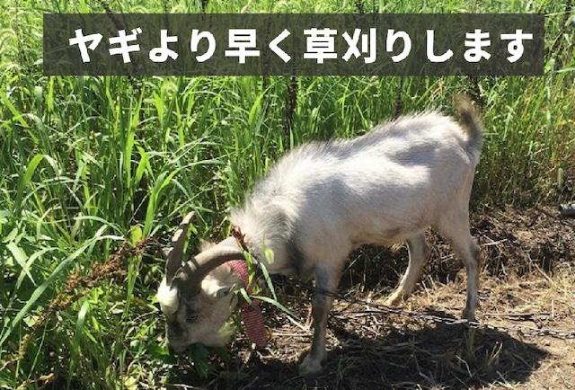 残りわずか【草刈り応援隊】コロナでファームステイ!草刈り&野菜の植え付けお手伝い