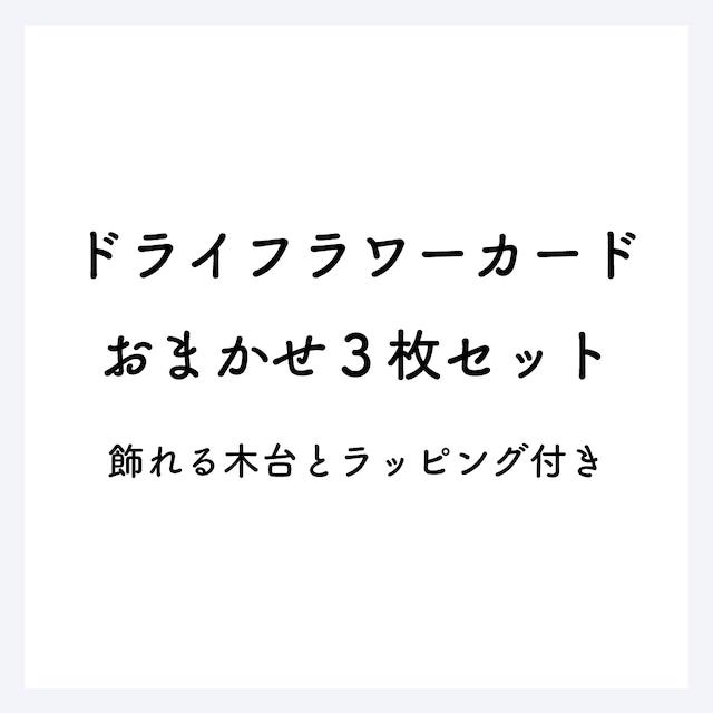 【web限定価格】ドライフラワーカードおまかせ3枚セット(飾れる木台とラッピング付き)