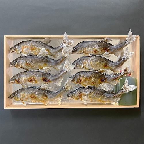 大鮎の塩焼(8尾)