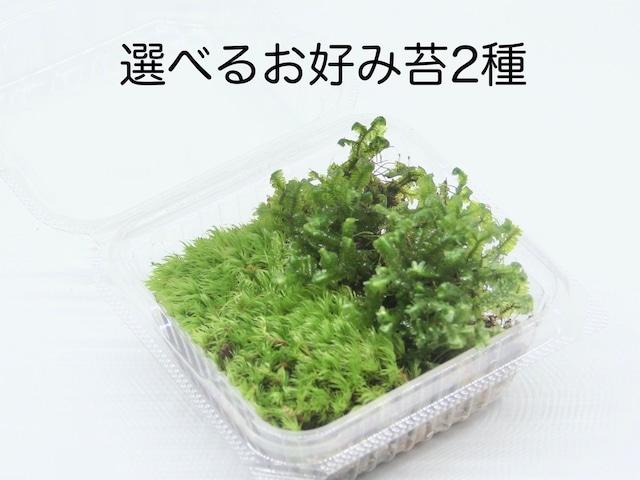 選べるお好み苔2種《苔テラリウム・コケリウム用生苔》