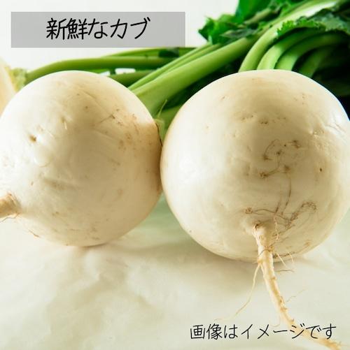 新鮮な秋野菜 : カブ 約3~4個  11月の朝採り直売野菜 11月14日発送予定