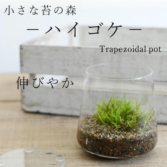 小さな苔の森−ハイゴケ− 台形ポット◆這うように成長【苔テラリウム】