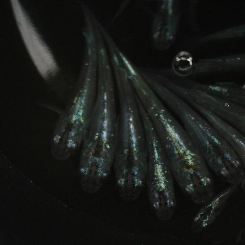 月虹系 紫陽花 メダカ 1ペア L