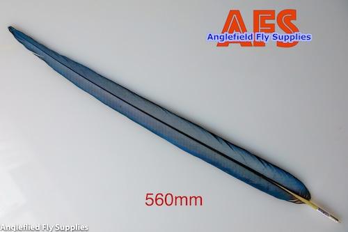 Blue-Gold Macaw Center Tails (BGMC1) / マコー センターテール