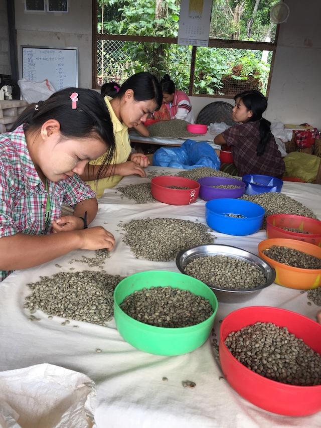 ダイレクトトレード ミャンマー手詰み完熟豆200g