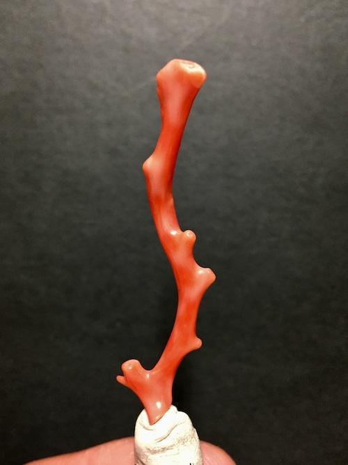 10) 赤サンゴ