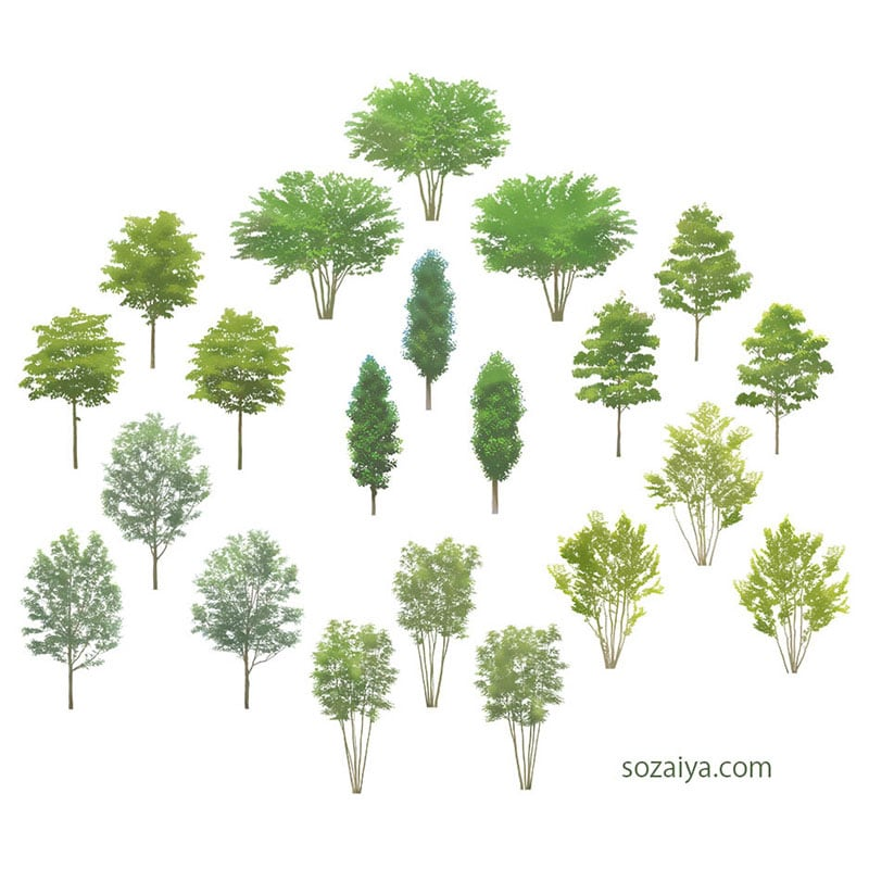 樹木イラストSketchUp 4b_003 - 画像2