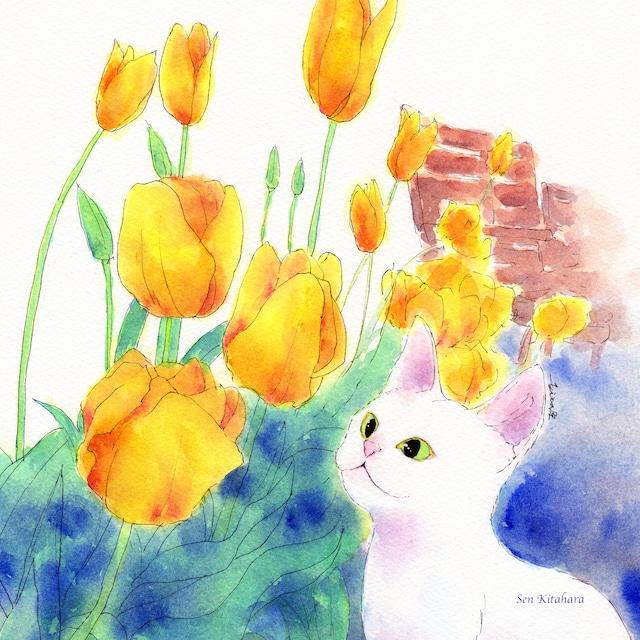 絵画 絵 ピクチャー 縁起画 モダン シェアハウス アートパネル アート art 14cm×14cm 一人暮らし 送料無料 インテリア 雑貨 壁掛け 置物 おしゃれ 水彩画 創作 猫 ネコ ねこ 動物 ロココロ 画家 : 北原 千 作品 : チューリップでお花見