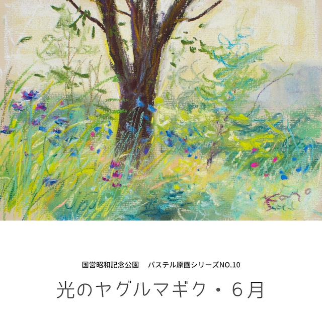 NO.10「光のヤグルマギク・6月」