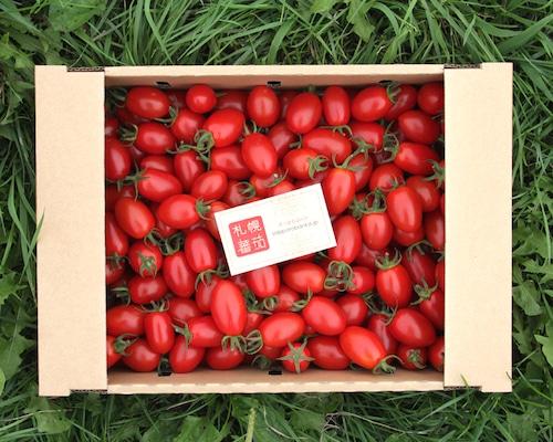 札幌蕃茄(アイコ)3kg
