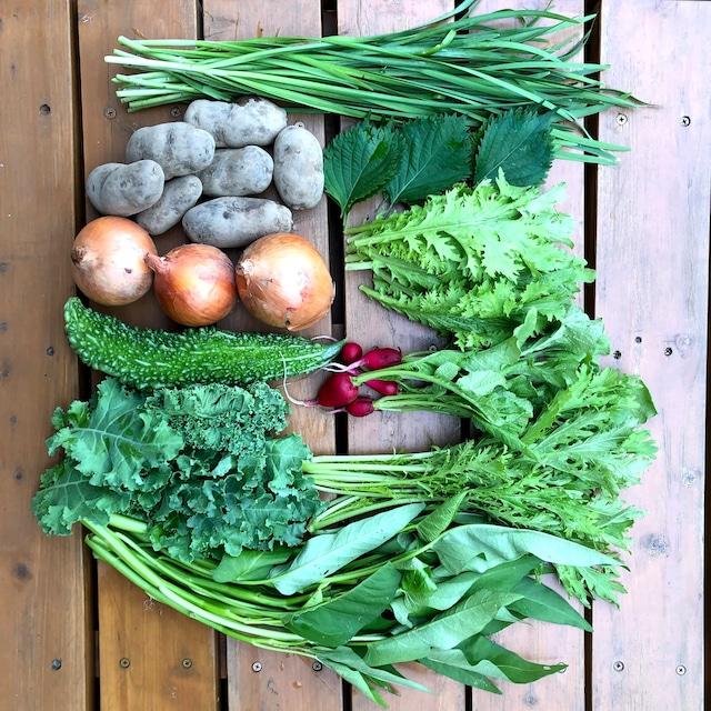 野菜セット(小) 定期便・毎週・無制限