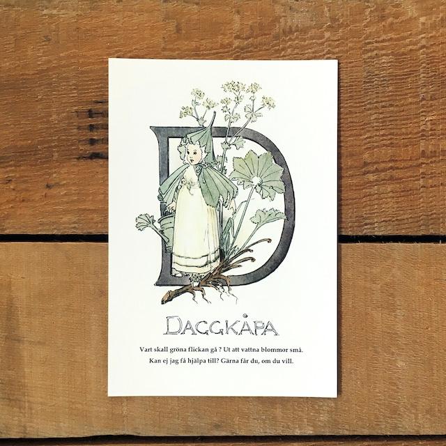 ポストカード「アルケミラウルガリス@DAGGKÅPA(王子たちの花文字 - 4)」