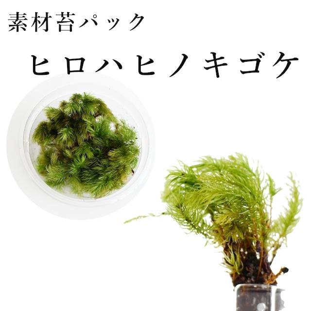 ヒロハヒノキゴケ 苔テラリウム作製用素材苔