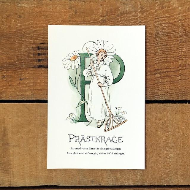 ポストカード「フランスギク@PRÄSTKRAGE(王子たちの花文字 - 16)」