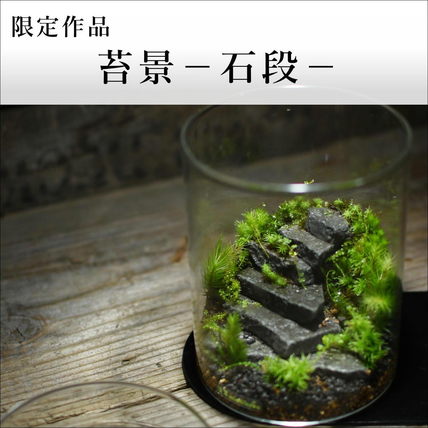 苔景−石段−【苔テラリウム・現物限定販売】2021.10.3#3