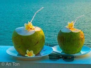 Dừa Tươi (1 quả )-ベトナムココナッツ 1個・Young Coconut