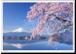 アート写真プリント A4サイズ 河口湖の桜