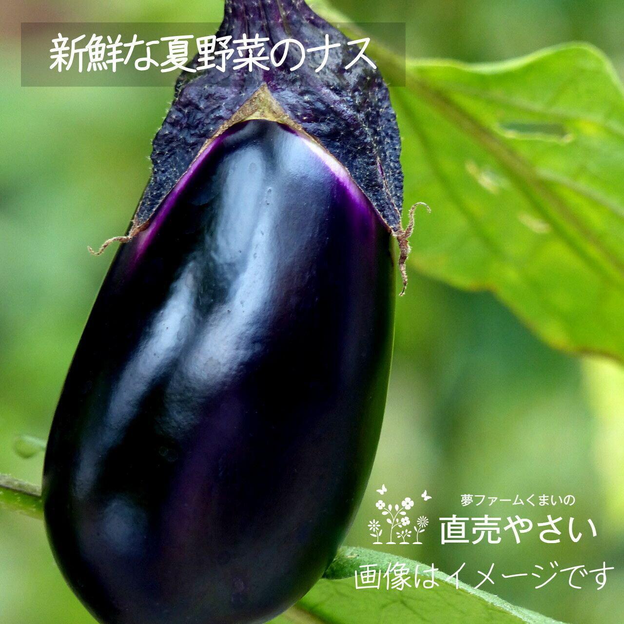 新鮮な秋野菜 : ナス 約350g 9月の朝採り直売野菜 9月12日発送予定