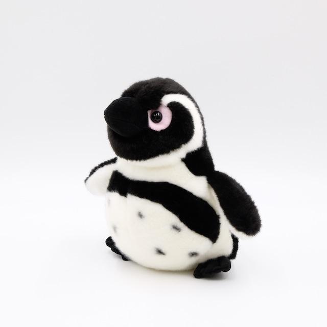 ぬいぐるみ ケープペンギン