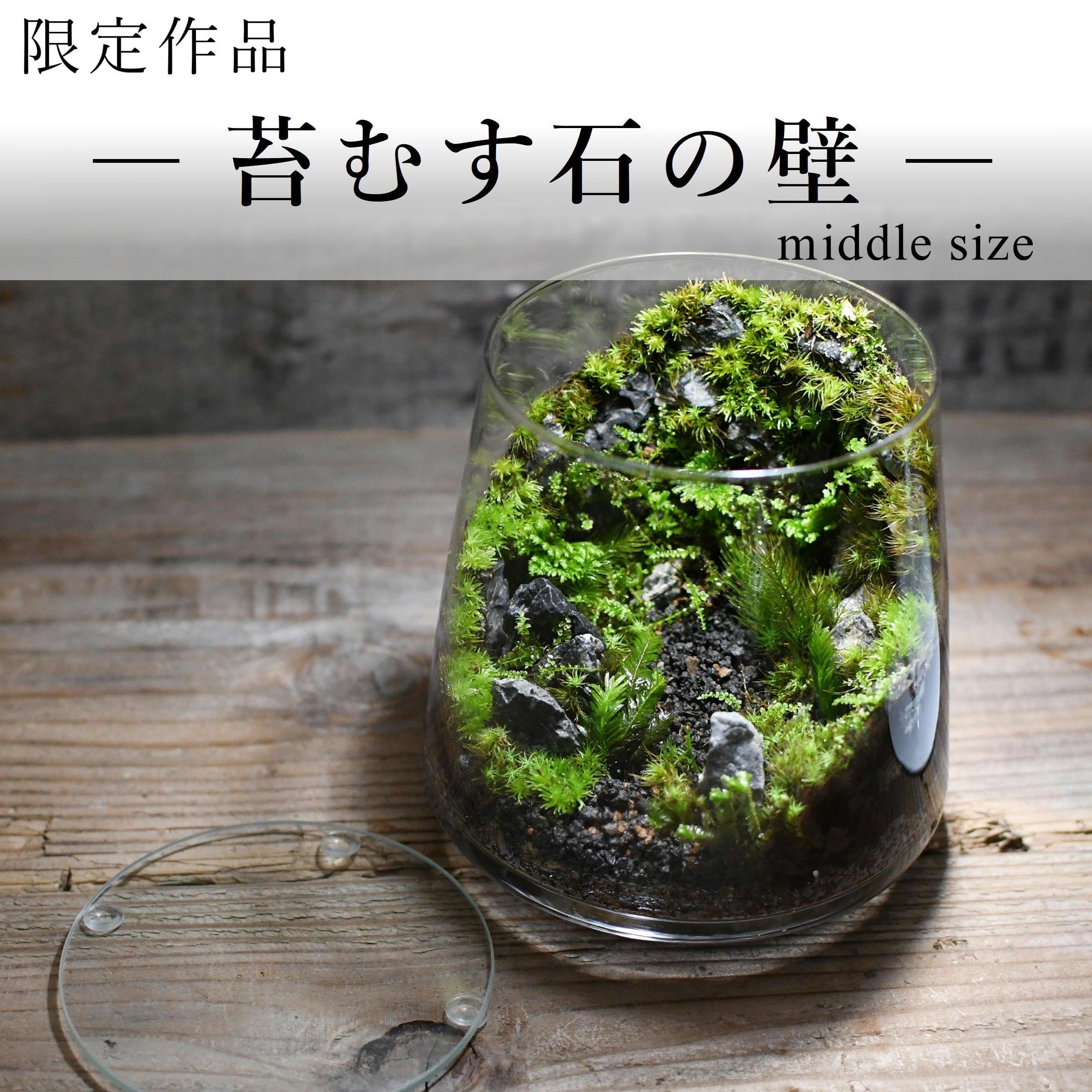 苔景−苔むす石の壁 small size −【苔テラリウム・現物限定販売】