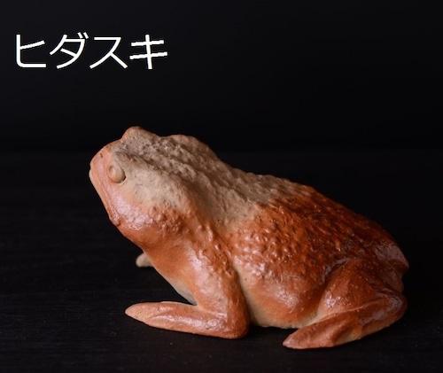 「ガマちゃん(ヒダスキ)」 澁田寿昭