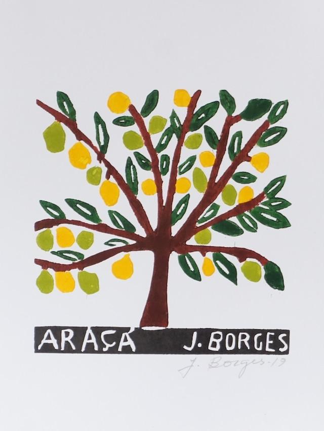 J.BORGES ジョタ・ボルジェス 木版画S 【ARA??】
