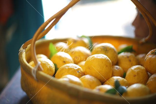 101 柚