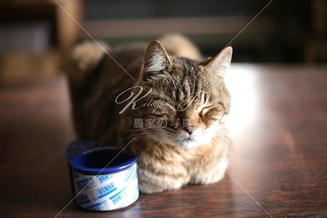 058 猫「トラとガムテープ」
