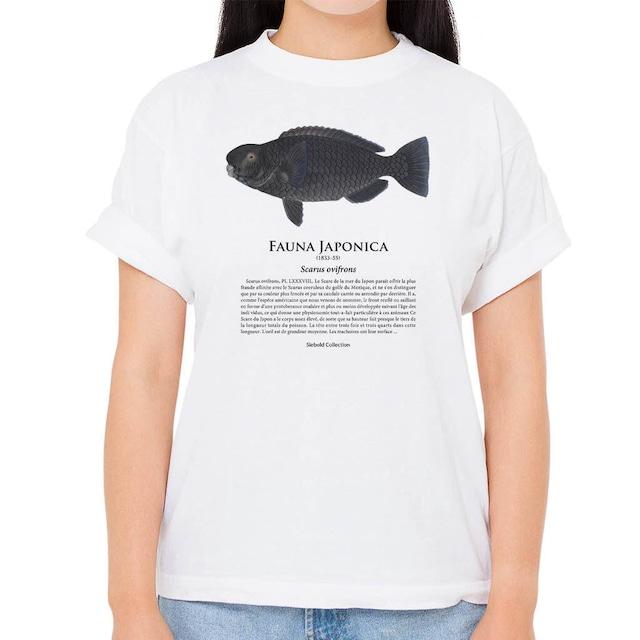 【アオブダイ】シーボルトコレクション魚譜Tシャツ(高解像・昇華プリント)
