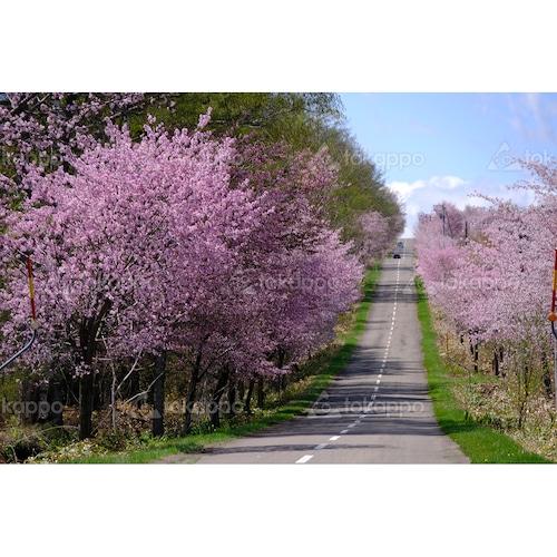 桜六花公園への道