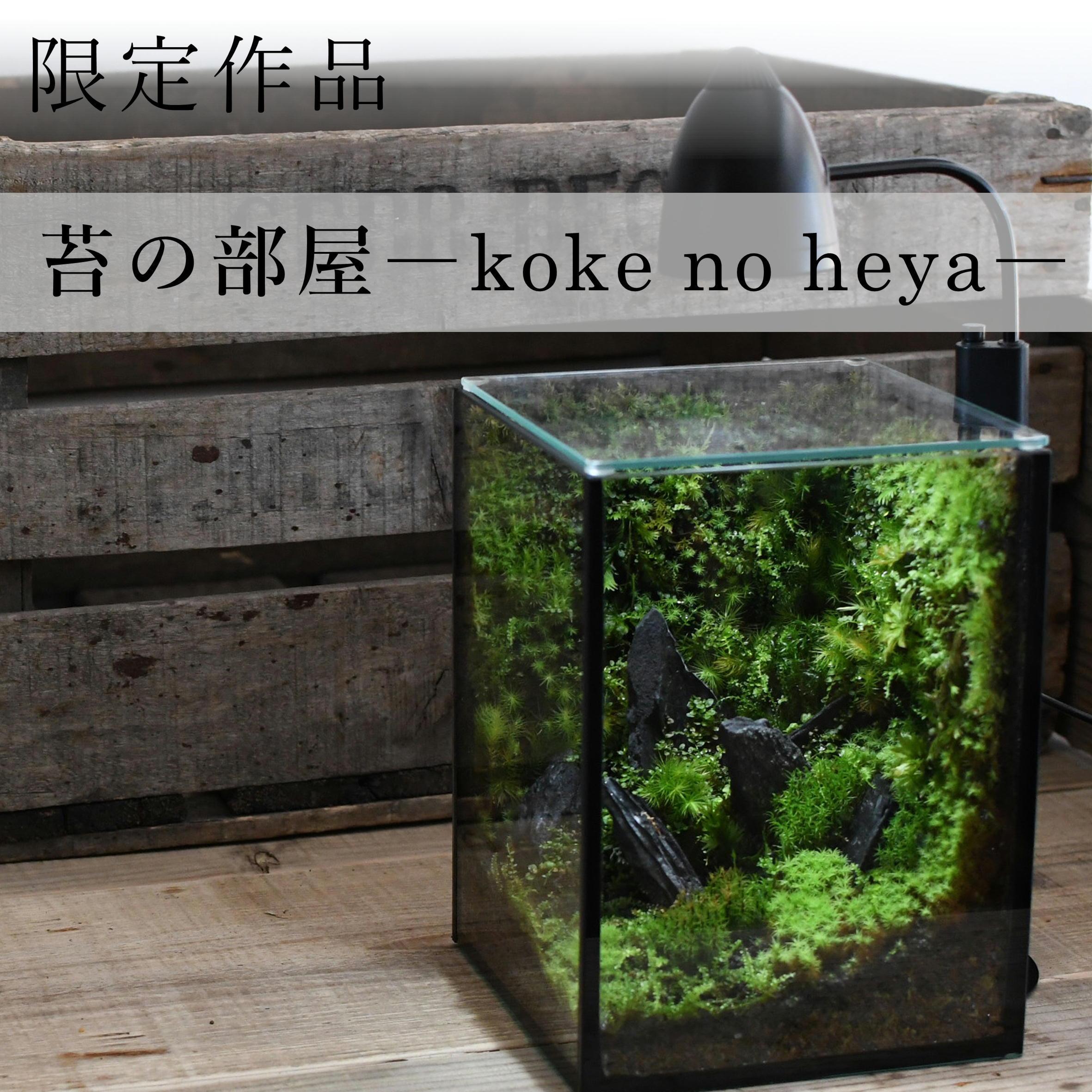 苔の部屋【苔テラリウム・現物限定販売】黒 ◆LEDライト付き