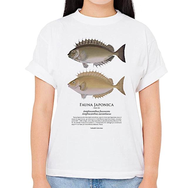 【アイゴ】シーボルトコレクション魚譜Tシャツ(高解像・昇華プリント)
