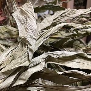 アフロコーン / とうもろこしの葉