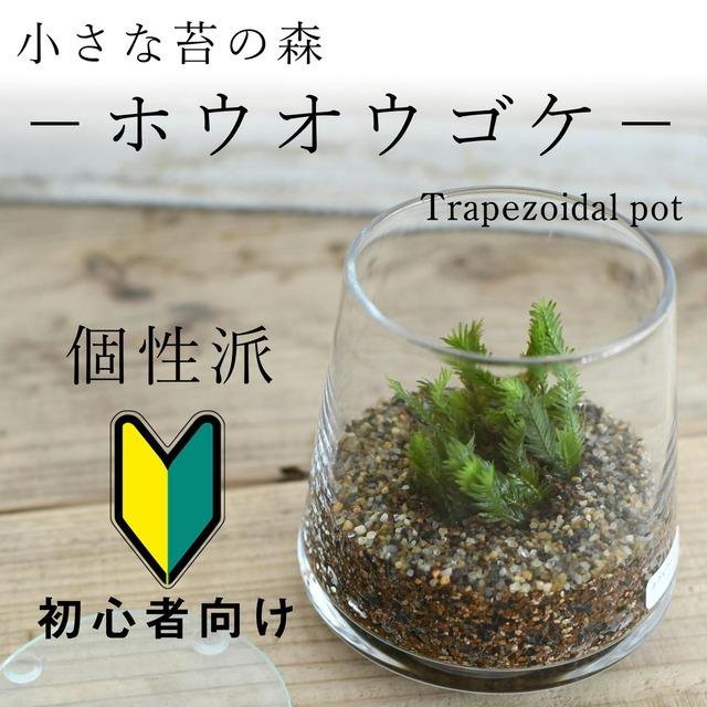 小さな苔の森−ホウオウゴケ− 台形ポット◆羽のようなフォルム【苔テラリウム】