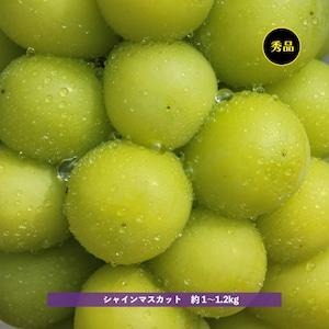 予約商品 信州須坂産 シャインマスカット 約1〜1.2kg