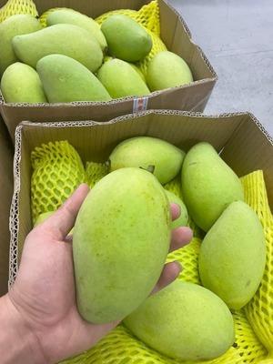 Xoài Cát Chu - Sour Green Mango (1kg)